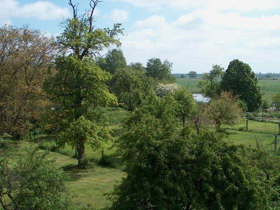 Mecklenburgische Seen Ferienwohnung Storchennest Ref. 85071-1 Bild 15