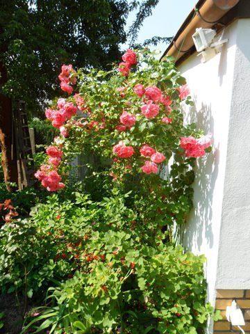 Bild 5 - Ferienwohnung - Objekt 178266-15.jpg
