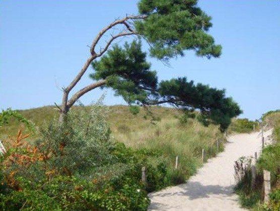Ostsee Fischland-Darß Ferienhaus am Strand - Umgebung - 2662-3