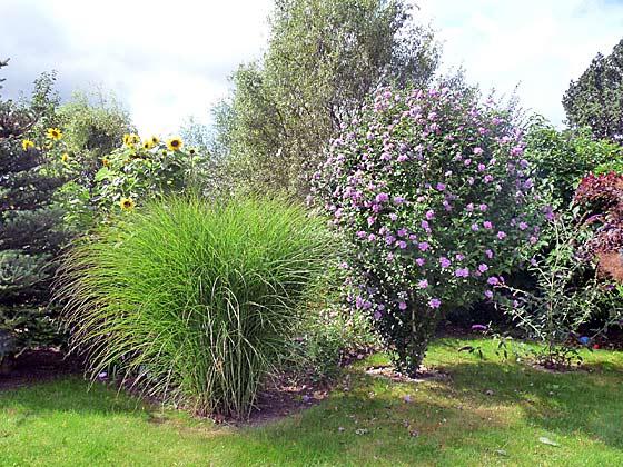 Nienhagen Garten b Ferienwohnung Möller Ref. 130116-1