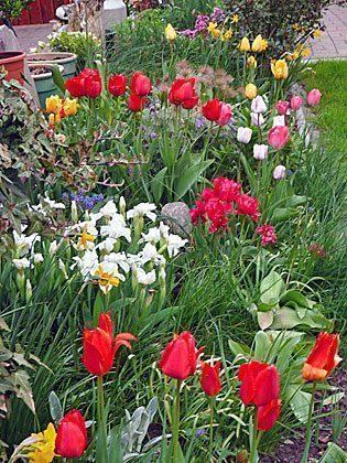 Nienhagen Garten c Ferienwohnung Möller Ref. 130116-1