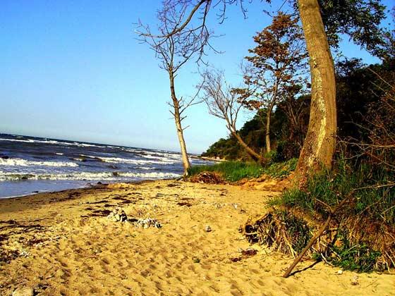 Bild 14 - Strand wild und jedes Jahr anders
