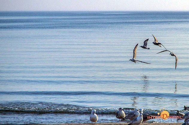 Am Strand Meeresbrise A 0.10 Ref. 128667-W