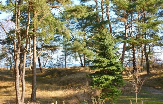 Blick vom Garten auf das Meer Ferienwohnung Sansibar Ref. 131422-P