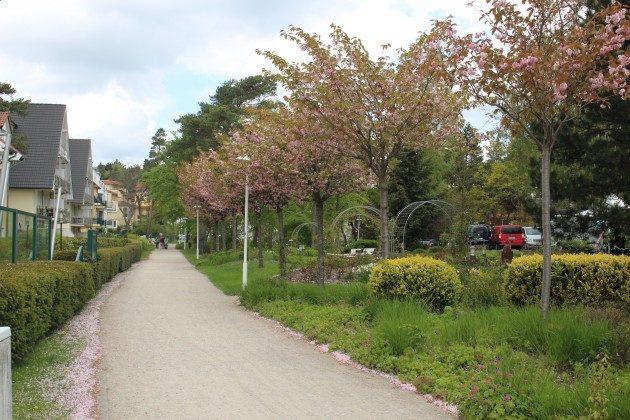 """Am Kurpark Ferienwohnung 44 """"Cozy Island"""" Ref. 213133 im Villen-Ensemble"""