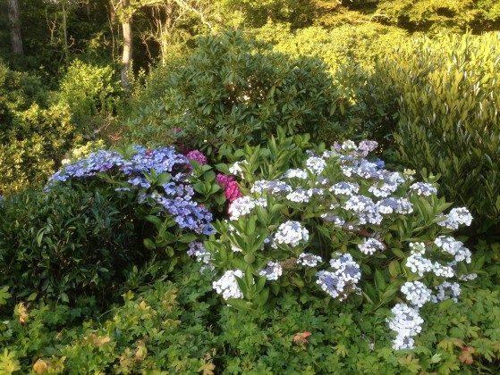 Der Garten Schlei Ferienwohnung Country Garden Ref: 176429