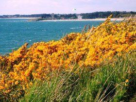 Bild 10 - Bretagne Golfe von Morbihan Ferienwohnung mit T... - Objekt 53196-2