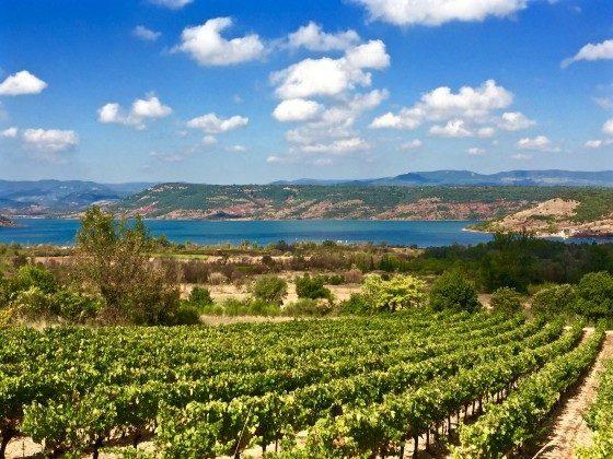 Weinfelder und See