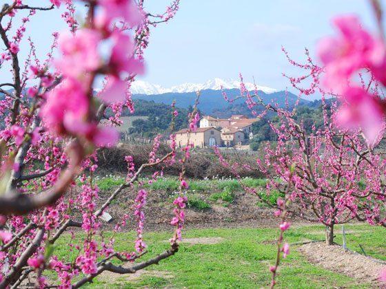 Bild 13 - Languedoc-Roussillon Tordères Ferienwohnungen ... - Objekt 63884-1