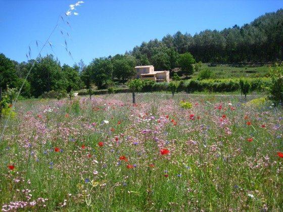 Provence Entrecasteaux Landhaus Le Bas de Pierre Ambert Bild 3