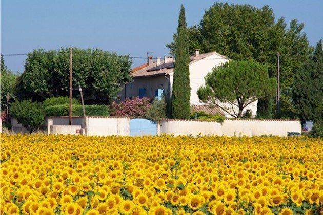 Ihr Feriendomizil mit Sonnenblumen