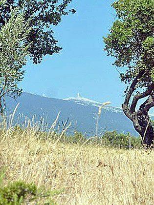 Bild 5 - Provence am Mt.Ventoux Ferienhaus Le Refuge - Objekt 1779-33