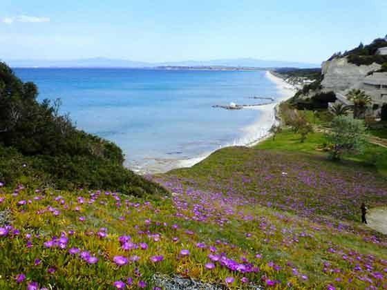 Wildblumen bis zum Strand im Frühjahr - Objekt 98602-1