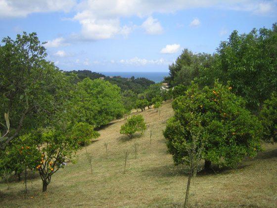 Garten Apulien Gargano Ref. 2729-8