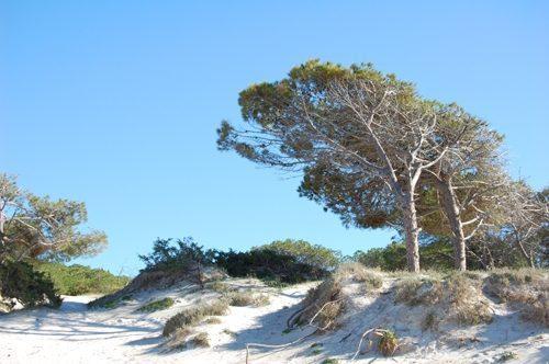 Bild 14 - Ferienwohnung Alghero - Ref.: 150178-1274 - Objekt 150178-1274