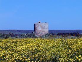 Bild 17 - Sardinien Ferienhaus in Cabras CA4  - Ref. 2994-6 - Objekt 2994-6
