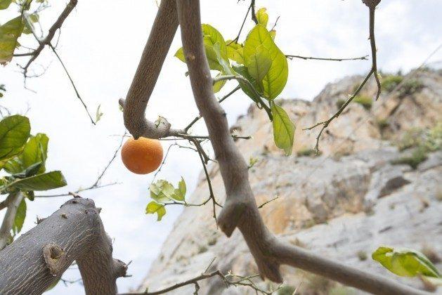 Garten Orangen - Cefalu Ferienwohnung Soto la Rocca Ref. 166798-3