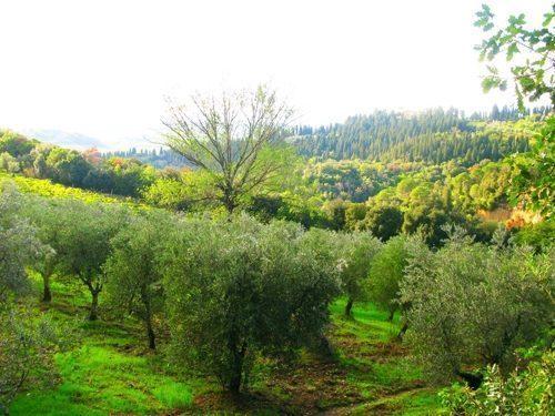 Bild 30 - Ferienwohnung Empoli - Ref.: 150178-1267 - Objekt 150178-1267