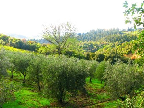 Bild 27 - Ferienwohnung Empoli - Ref.: 150178-1268 - Objekt 150178-1268