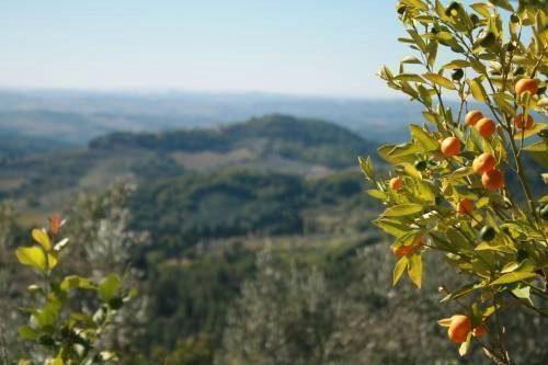Bild 15 - Ferienwohnung Greve in Chianti - Ref.: 150178-492 - Objekt 150178-492