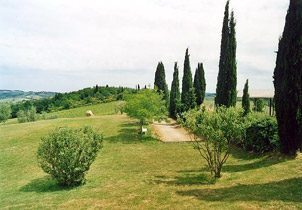 Bild 2 - Toskana Poggibonsi Fattoria Piecorto - RIF 1200 - Objekt 1458-19