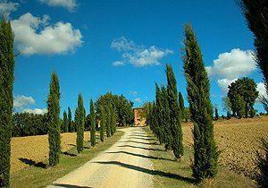 Bild 2 - Ferienwohnung Foiano della Chiana - Ref.: 15017... - Objekt 150178-108