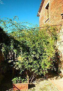 Bild 6 - Ferienwohnung Foiano della Chiana - Ref.: 15017... - Objekt 150178-109