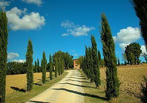 Bild 2 - Ferienwohnung Foiano della Chiana - Ref.: 15017... - Objekt 150178-110