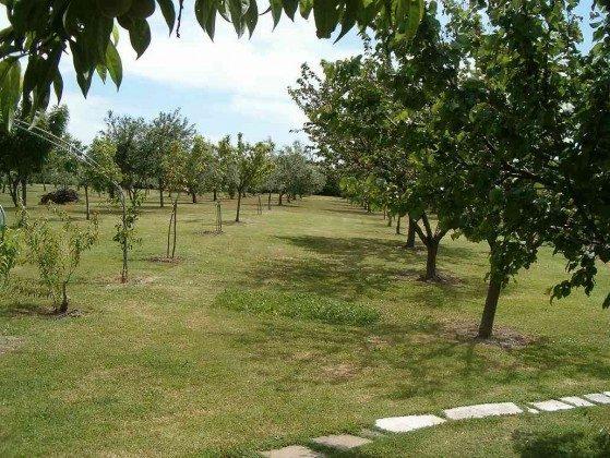 Obstbäume vom Anwesen
