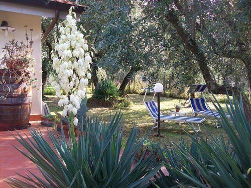 Bild 24 - Ferienwohnung Lucca - Ref.: 150178-1253 - Objekt 150178-1253