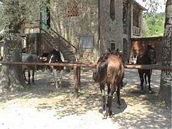 Pferde Toskana Agriturismo