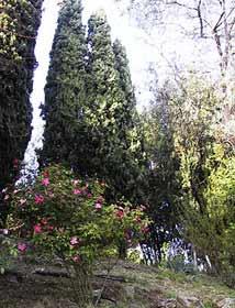 Garten Toskana Ferienhaus 21761-4