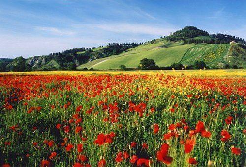 Bild 6 - Ferienwohnung Montelopio - Ref.: 150178-71 - Objekt 150178-71