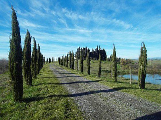 Bild 11 - Toskana Volterra Ferienvilla Ruffili - Objekt 7478-2