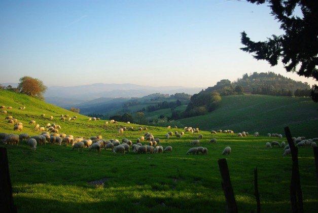 Blick in die Landschaft  Ferienhaus Malacarne bei Volterra