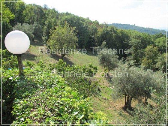 Ca. 5.000 qm großer Olivenhain zur alleinigen Nutzung mit Blick auf Montecatini Alto.