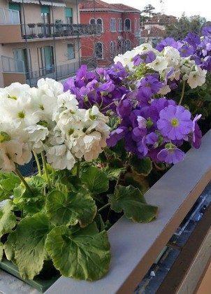 Balkon Venedig Lido Appartement Ref. 2399-2