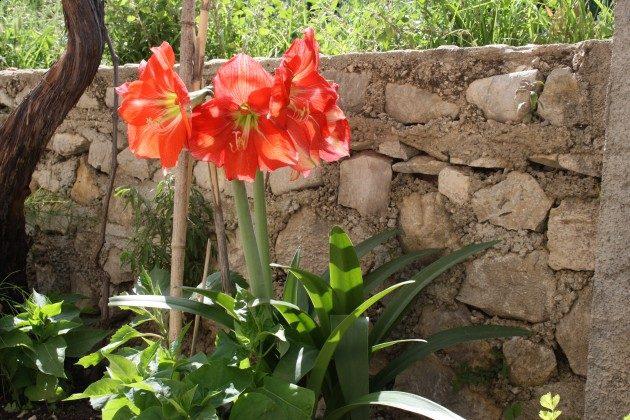 Blumenbeet vor der Terrasse - Objekt 192577-1