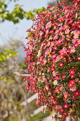 mediterrane Pflanzen im Garten