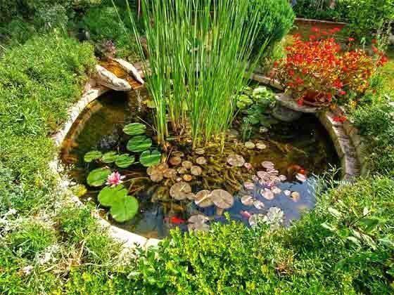 kleiner teich im Garten - Objekt 160284-12