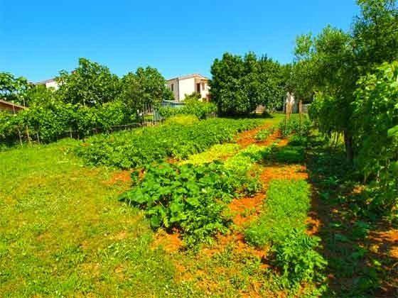Gemüsegarten Hinter dem Haus - Objekt 160284-259