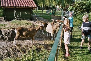 Bild 9 - Niederlande Nordsee Ferienhaus Sint Maarten - Objekt 66937-1