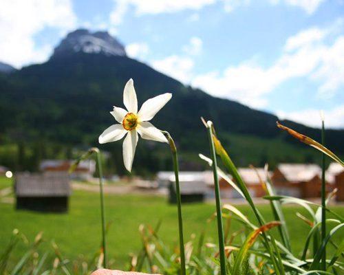 Bild 6 - Ferienwohnung Altaussee - Ref.: 150178-555 - Objekt 150178-555
