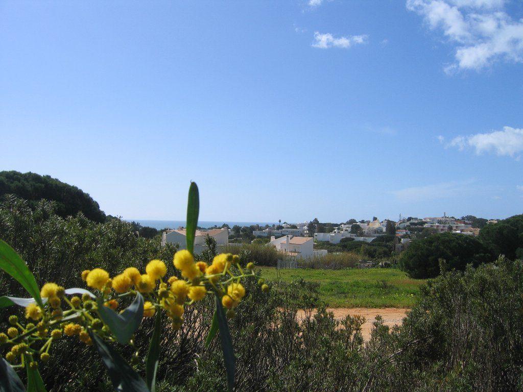 Bild 8 - Algarve Sesmarias Ferienhaus Casa Belgard - Objekt 111988-1