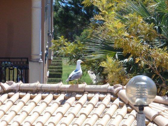 Algarve Albufeira Ferienwohnung Ref. 124113-6 Bild 23