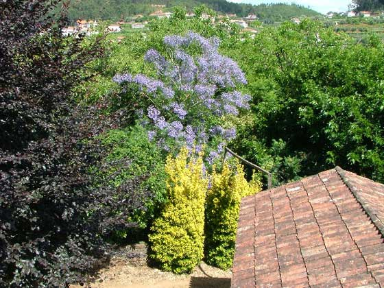 Bild 17 - Portugal Costa Verde Quinta Ferienhaus Ref. 37412 - Objekt 37412-1
