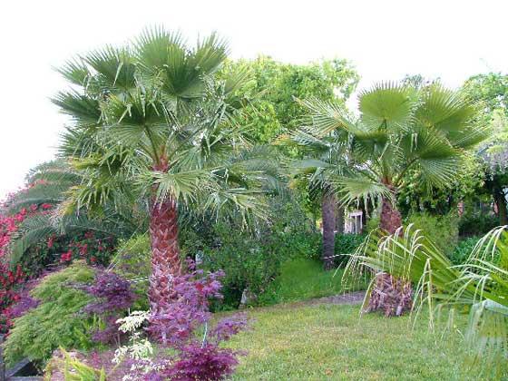 Bild 27 - Portugal Costa Verde Quinta Ferienhaus Ref. 37412 - Objekt 37412-1