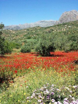 360° Ausblick Andalusien Cortijo y Manta Ref. 192936-1