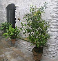 Eingang Apartment Granada Andalusien