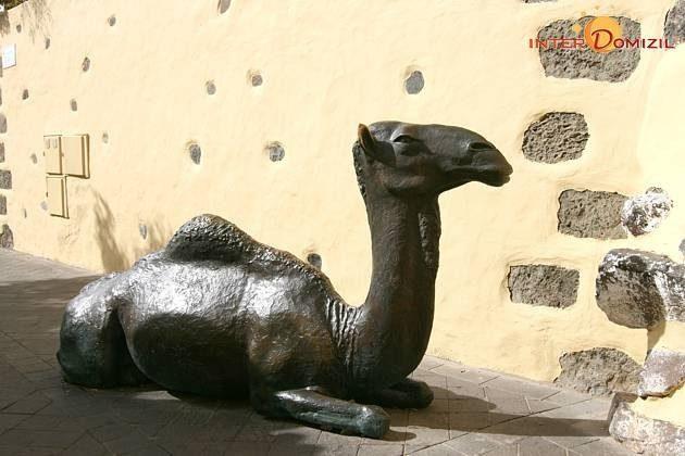 Kamel in der kleinen Gasse neben dem Hotel